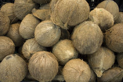 Whole coconuts in pile closeup photo. Exotic fruit or nut. Brown hairy coconuts for sale Royalty Free Stock Images