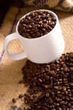 Whole Coffee Beans in Cup Stock Image