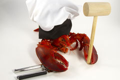 Lobster Chef Royalty Free Stock Photo
