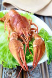 Whole cooked lobster with salad Stock Image