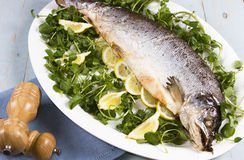 Whole cooked salmon Royalty Free Stock Photo