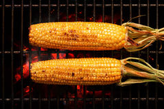 Whole Corn on grill Stock Photography