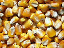Whole corn Stock Photos