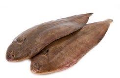 Whole couple fresh sole fish on white background Stock Images