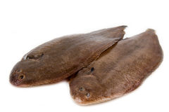 Whole couple fresh sole fish Royalty Free Stock Photography