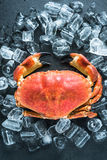 Whole crab on dark slate and ice Stock Images