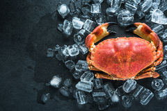 Whole crab on dark slate and ice stock photography