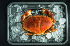 Whole crab on ice cubes. From above Royalty Free Stock Image