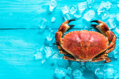 Whole crab on ice cubes. And wooden vibrant table Stock Photography