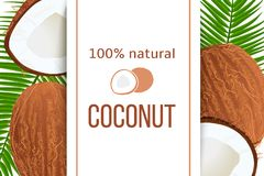Whole and cracked Ripe coconuts and palm leaves with stripe text 100 percent natural. Vertical label. Tropical. Vector illustration. Idea for logo, label vector illustration