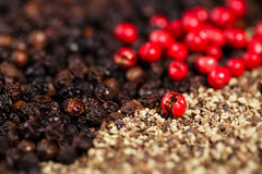 Whole, crashed and ground black and red peppercorns Royalty Free Stock Images