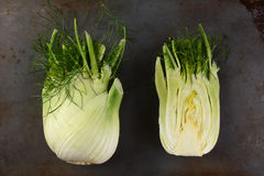 Whole and Cut Fennel Bulbs Stock Photos