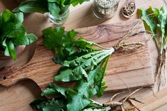 Whole dandelion plant including root on a wooden table. Whole dandelion plant with roots and leaves on a wooden table, top view royalty free stock image