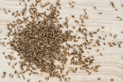 Whole Dill seed Stock Photography