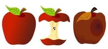 Whole Eaten and Rotten Apple Stock Photos