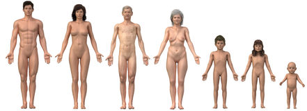 Whole family in anatomical position Stock Image