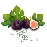 Whole figs with slice and leaf Stock Images