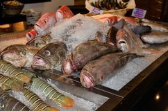 Fresh Fish for Dinner at a restaurant in Dubai. Whole fish on ice to sell for dinner at a Dubai restaurant royalty free stock images