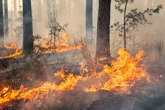 Whole forest area in fire and covered by flame Royalty Free Stock Image