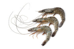 Whole fresh black tiger shrimps Stock Image