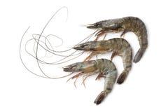 Whole fresh black tiger shrimps Stock Image