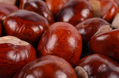 Whole fresh chestnuts Royalty Free Stock Photos