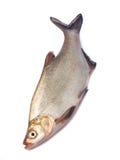 Whole fresh fish Royalty Free Stock Photography