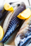 Whole fresh fish, mackerel on iron background,closeup Stock Photos