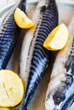 Whole fresh fish, mackerel on iron background,vertically Royalty Free Stock Photos