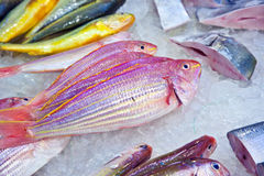 Whole fresh fishes are offered in the fish market Royalty Free Stock Images
