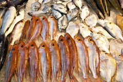 Whole fresh fishes are offered in the fish market in asia Royalty Free Stock Image