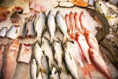 Whole fresh fishes are offered in the fish market in asia Stock Photography