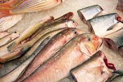 Whole fresh fishes are offered in the fish market in asia Royalty Free Stock Photo