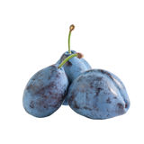 Whole fresh plums Stock Photography