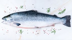 Whole fresh raw big salmon fish with seasoning, salt, pepper, rosemary on white marble table, top view, long banner format. Whole fresh raw big salmon fish with stock photography
