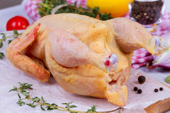 Whole fresh raw chicken prepared for roast with thyme, basil and tomatoes cherry.  Stock Photo
