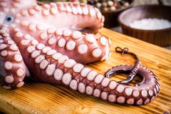 Whole fresh raw octopus   with tentacles closeup Stock Images