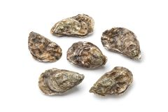 Whole fresh raw oysters Royalty Free Stock Photography