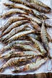 Whole fresh raw shrimps seafood. On paper ready to cook Stock Image