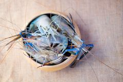 Whole fresh raw shrimps seafood. In wooden bowl ready to cook Royalty Free Stock Photo