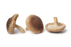 Whole fresh shiitake  Royalty Free Stock Photography