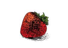 Whole fresh strawberry Stock Photos