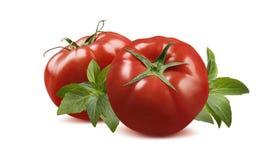 Whole fresh tomatoes and basil isolated on white background Royalty Free Stock Photos