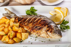 Whole fried dorado Royalty Free Stock Image