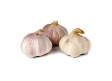 Whole garlic bulb on white Royalty Free Stock Photos