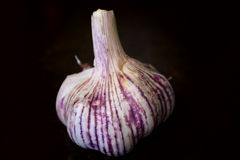 A whole garlic Royalty Free Stock Images