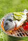 Whole gilthead breem grilliing on a bbq Royalty Free Stock Photo