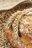 Whole grain bread and wheat ears Stock Images