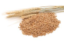 Free Whole Grain Of Wheat. Stock Photography - 119707572