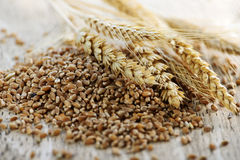 Whole grain wheat kernels closeup Royalty Free Stock Image